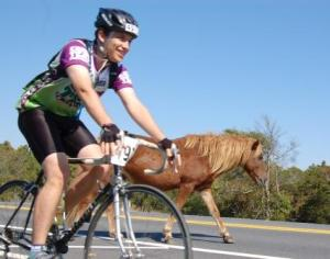 How many races do you get to ride right beside a wild pony?